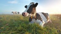 sustainable-food-systems-pasture-grasslands